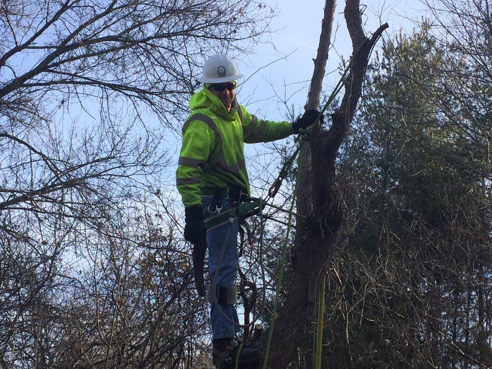 February Tree trimmer 2-16-17.jpg
