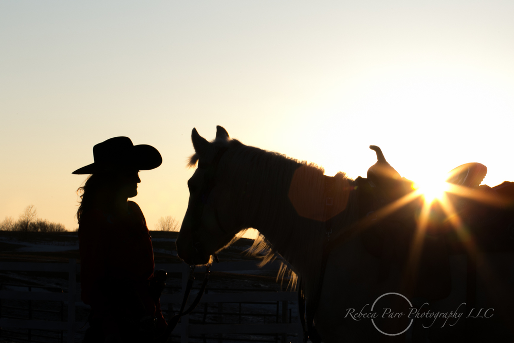 horse photography equine Minnesota photographer sunset silhouette