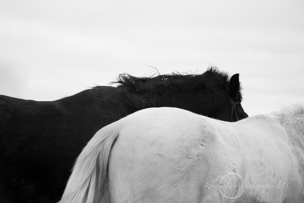 horse photography equine Minnesota photographer