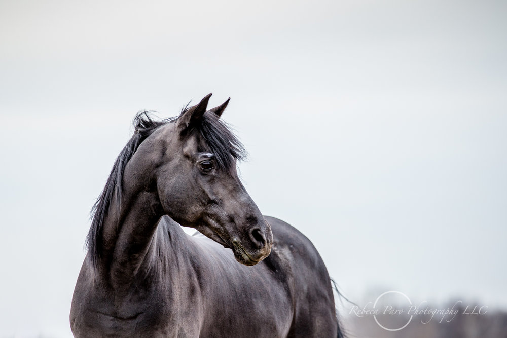 Minnesota horse photographer-37.jpg