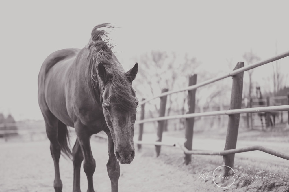 Minnesota horse photographer-58.jpg