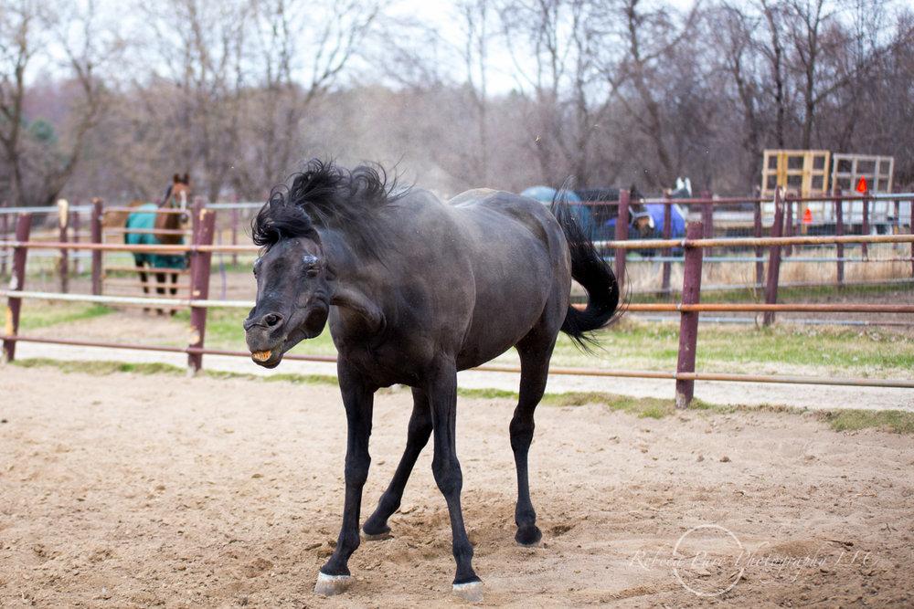 Minnesota horse photographer-65.jpg