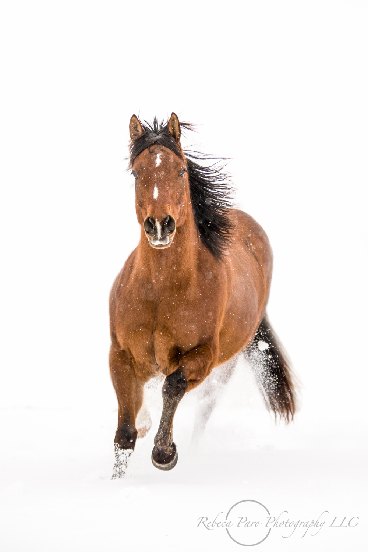 Minnesota Equine Photographer Rebeca Paro Photography Llc Horse Blogs