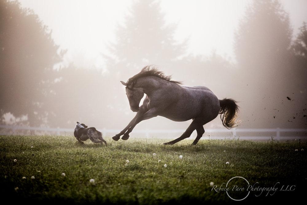Horse photography minnesota