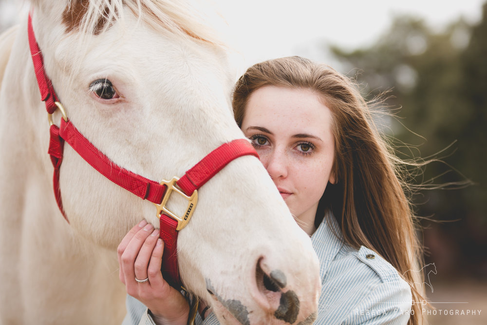 Horse photography Minnesota photographer