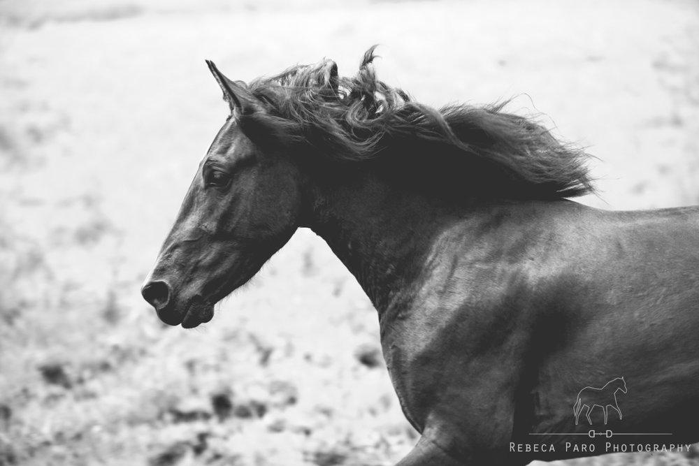 Rocky-15.jpgRunning horse