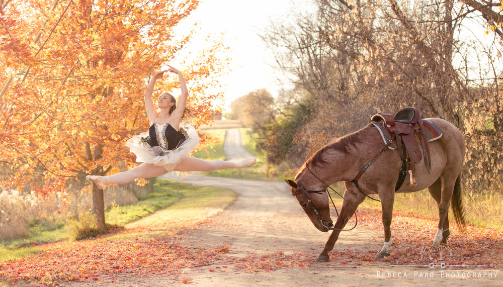 Mn horse