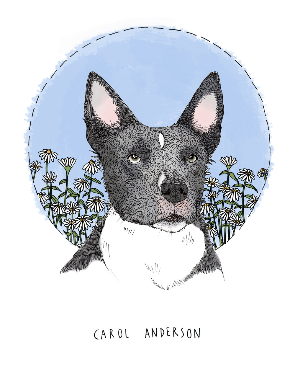 Carol Anderson  Pet Portrait Commission  Pen and ink with digitally added color.   2017