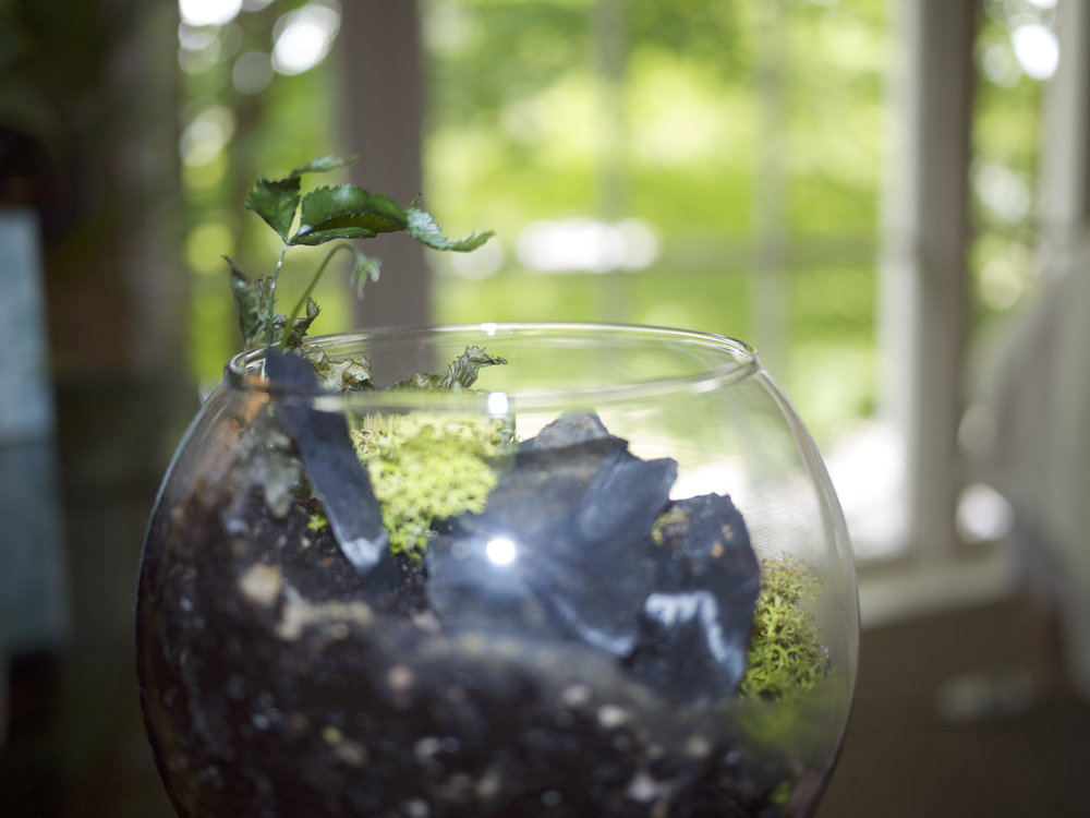 Josh glass planter.jpg