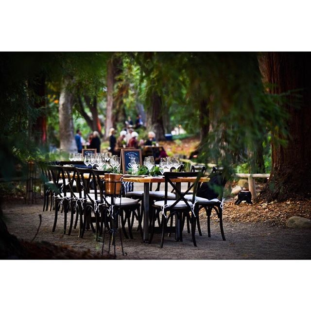 Stunning dinner in the #redwoodforest @santabarbarabotanicgarden with @allheartrentals providing amazing #handcrafted tables with food by @barbareno_sb and drinks by @thegoodlionbar #fearlessphotographers #santabarbaraphotographer #sb #805 #botanicalgarden #dinnerideas #santabarbarawedding #instawed #instawedding #sblocation #centralcoast #fancypants #weddings