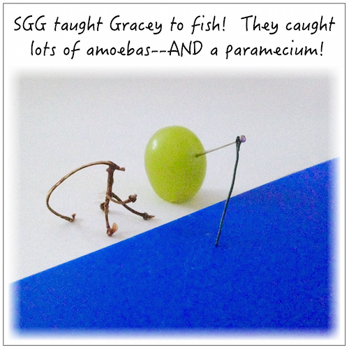 Honeymoon of SGG: Fishing Fun!