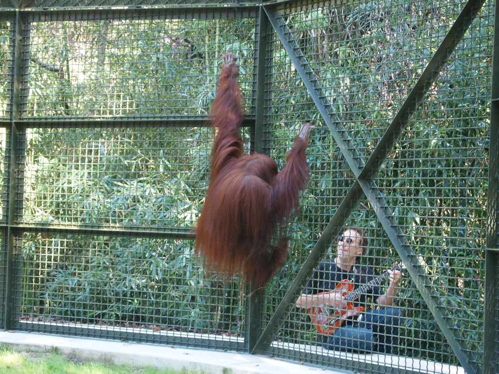 Geri at Center For Great Apes