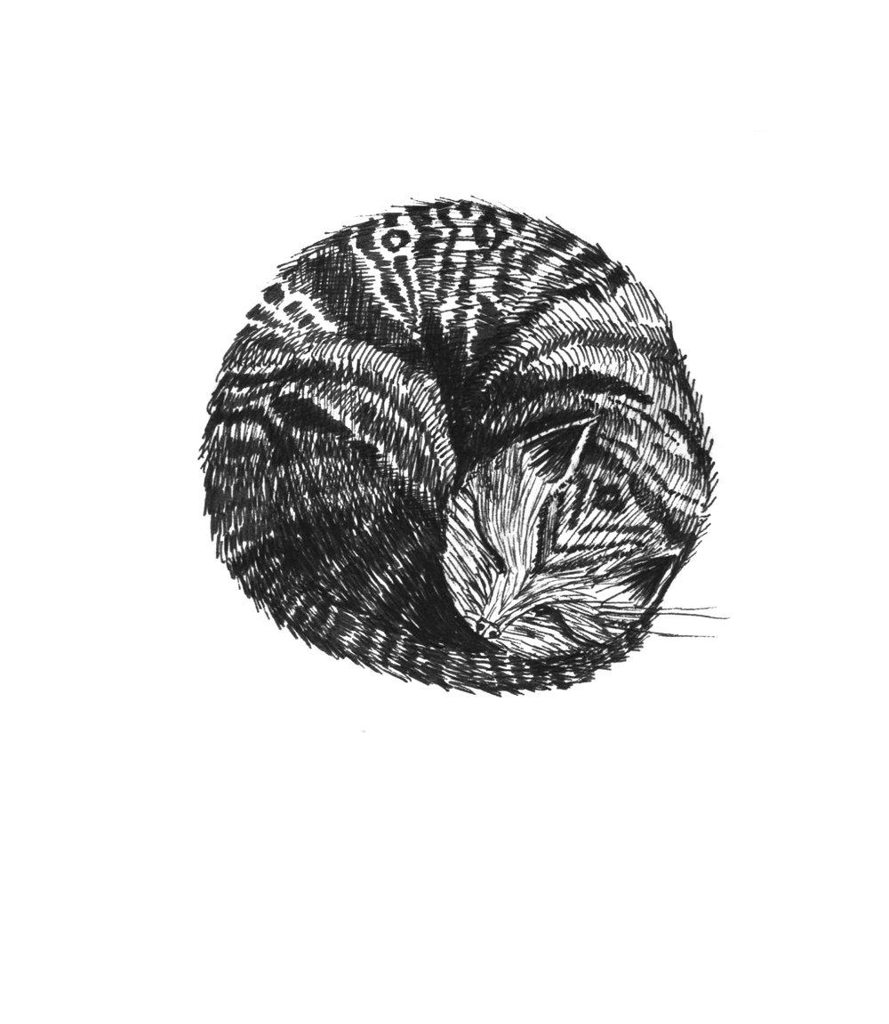 cat, 10 x 10 cm, 2016