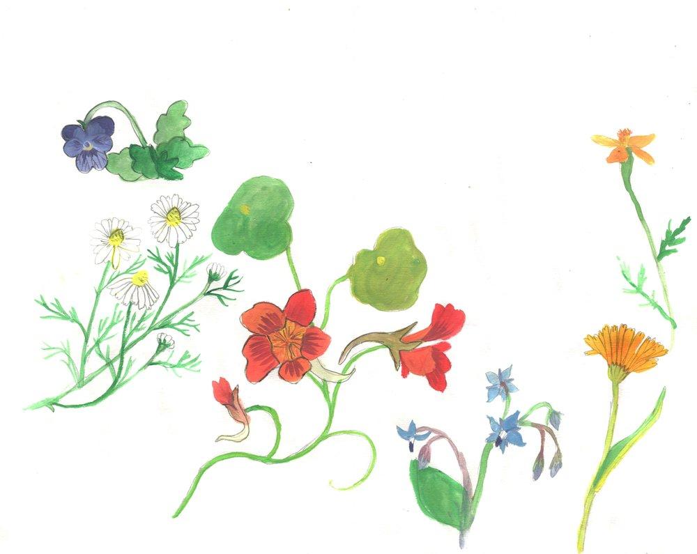 Edible flowers, 2016