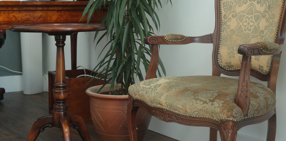 chair and plant 2.jpg