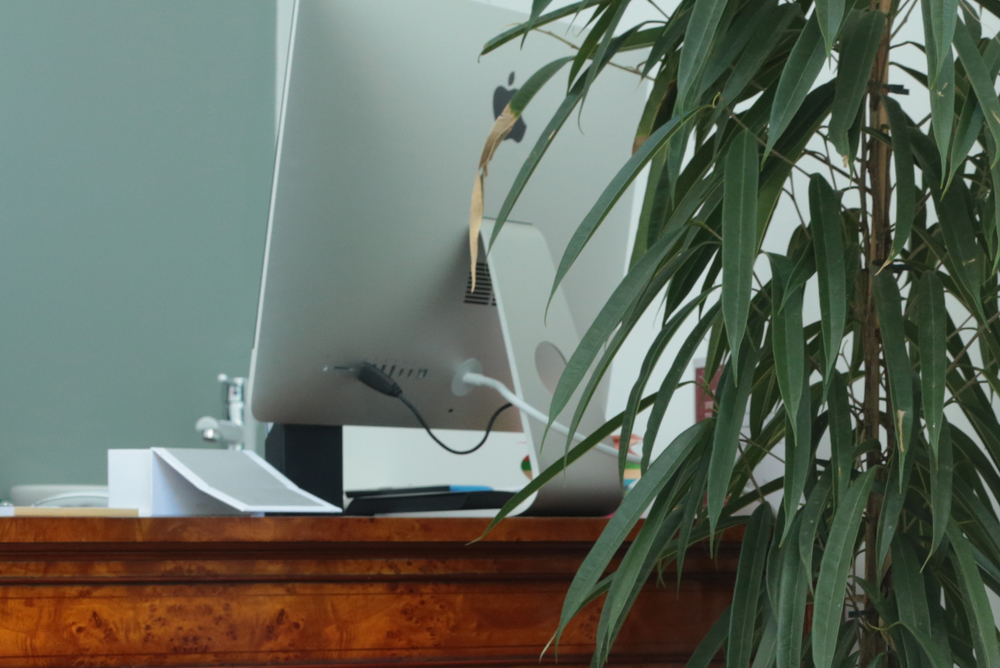 computer and plant.jpg