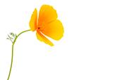 Mini LK Flower.jpg