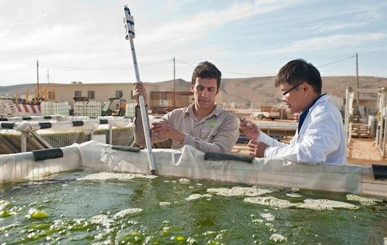 univerve-algae-ponds-israel.jpg