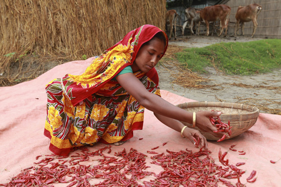 Joygun spreads out chillies in the sun to dry as part of Oxfam's chilli growing programme in Bangladesh