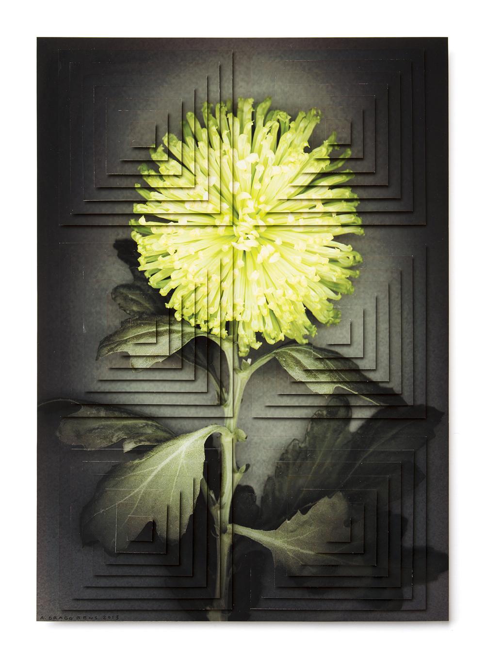 ziggurat fiori DR7.jpg