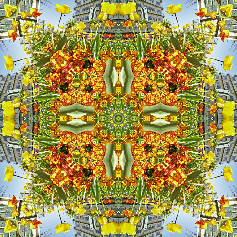Delicate flowerpetal
