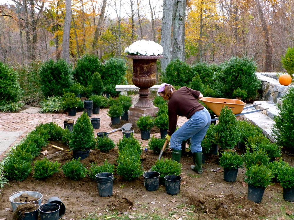 The Tipsy Tomato - building a knot garden