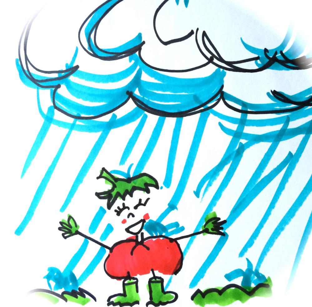 TipsyTomato-in-rain-drawing