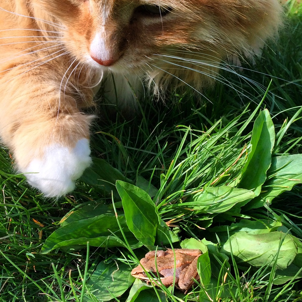 Curiosity does not kill the cat, nor us either. (For more Tumbles in the garden, pop over to  Instagram .)