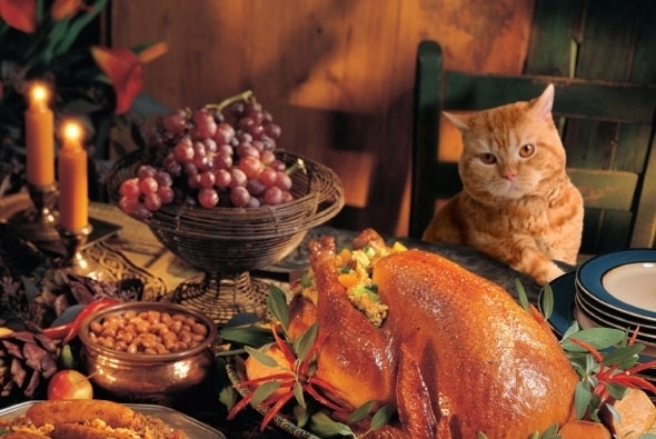 590x395_thanksgiving_cat.JPG