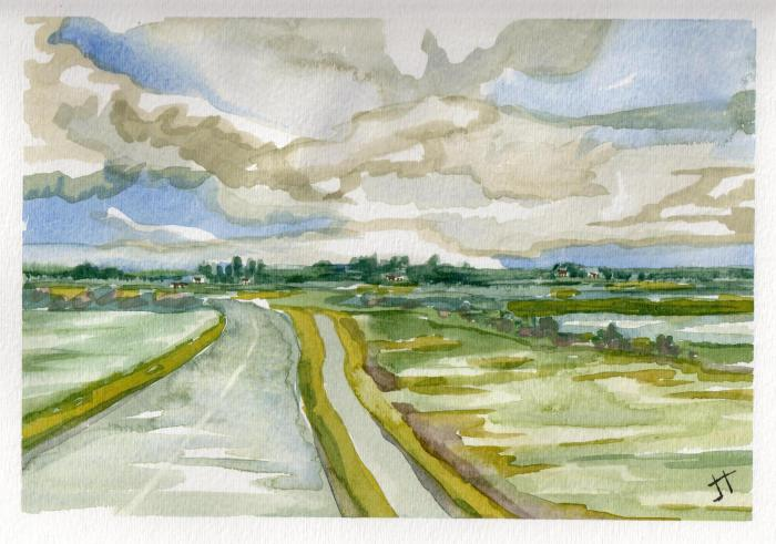 Watercolour by Jane Tims