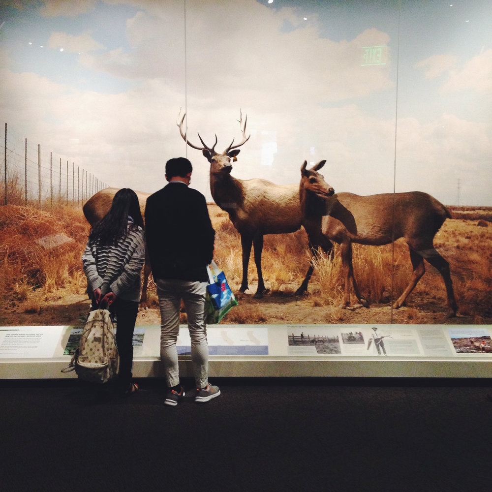 """Whoa, this museum has the best dioramas ever,"" mused the elk. ""So many varieties of humans on display. Fully mechanized too."""