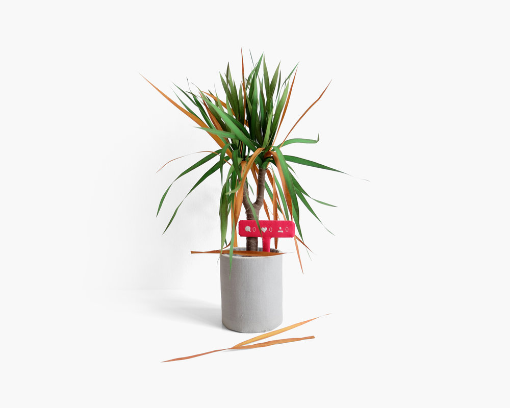 Dracaena Introverta  Hardwood dowel, foam, armature wire, felt, cotton cloth, fabric marker, embroidery floss, FrayCheck Approximately 15 x 10 x 10 in 2018