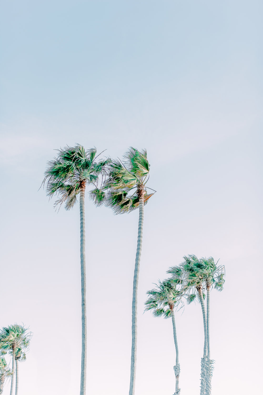 Cori-Kleckner-Photography-BingFamilySession1.JPG