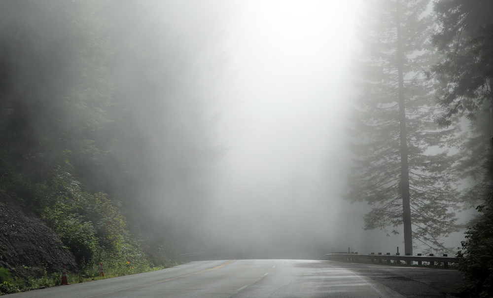 Misty morning drive in the Pacific Northwest