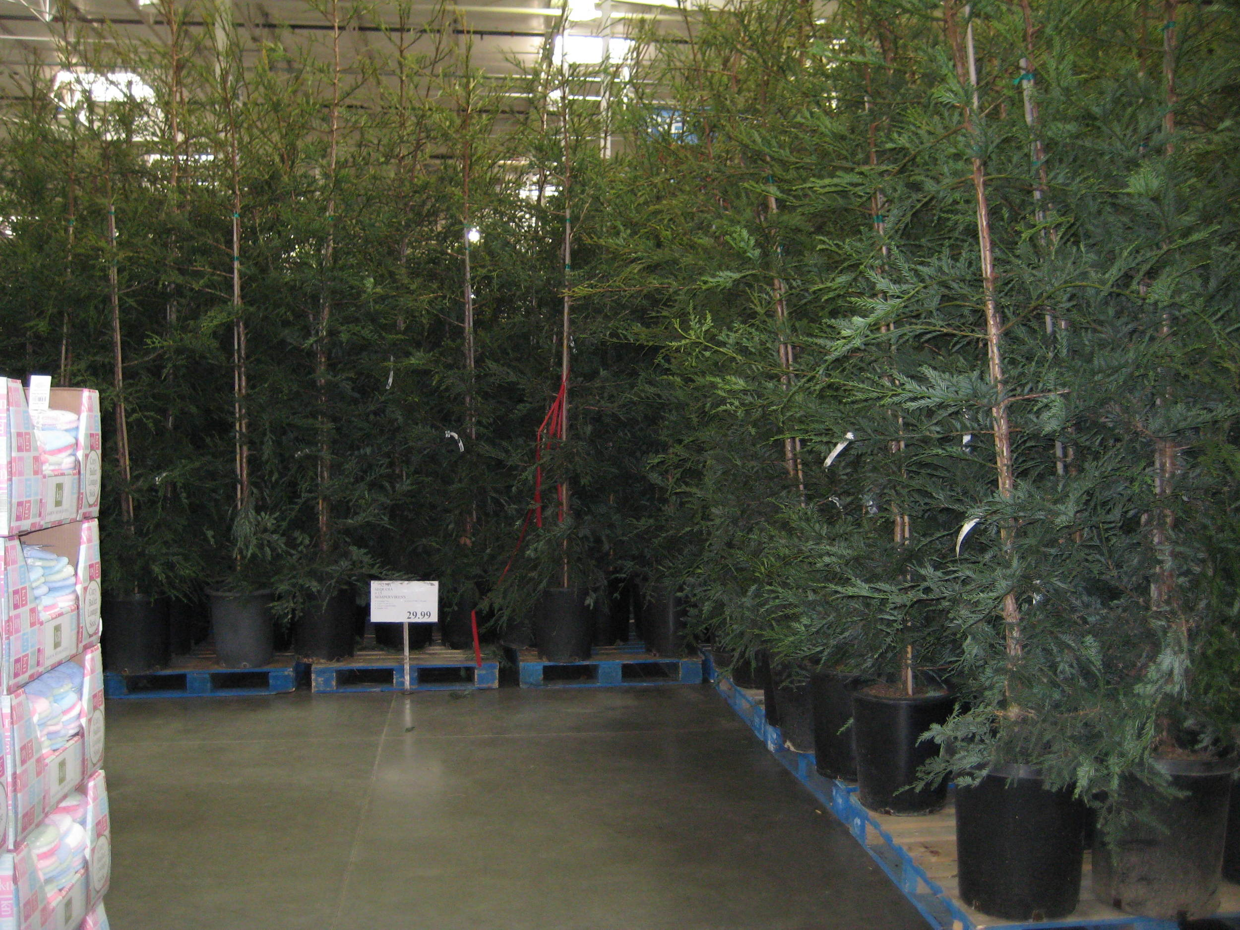 sequoia at costco