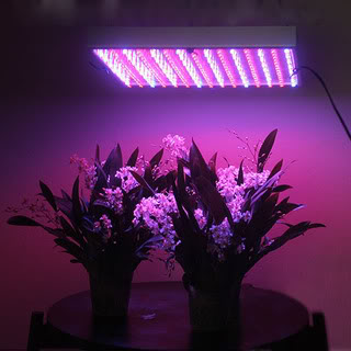 led-grow-light-panel-225-led-110-vo.jpg