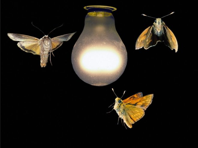 _97165554_z3550959-moths_around_a_light_bulb-spl.jpg