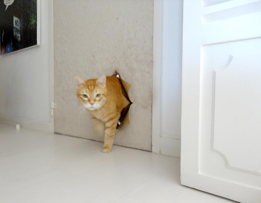 Saio do elevadore muito antes de cumprimentar a Inês tivede saudar o seu felino - festas e romrons logo à chegada!