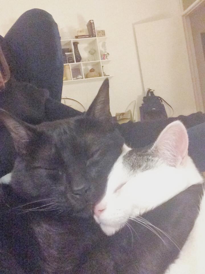 os meus queridos gatos.jpg