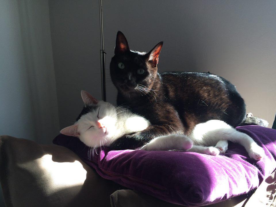 Os gatos, o Sol e a sesta.