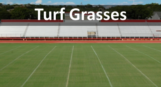 turf grass thumb.jpg