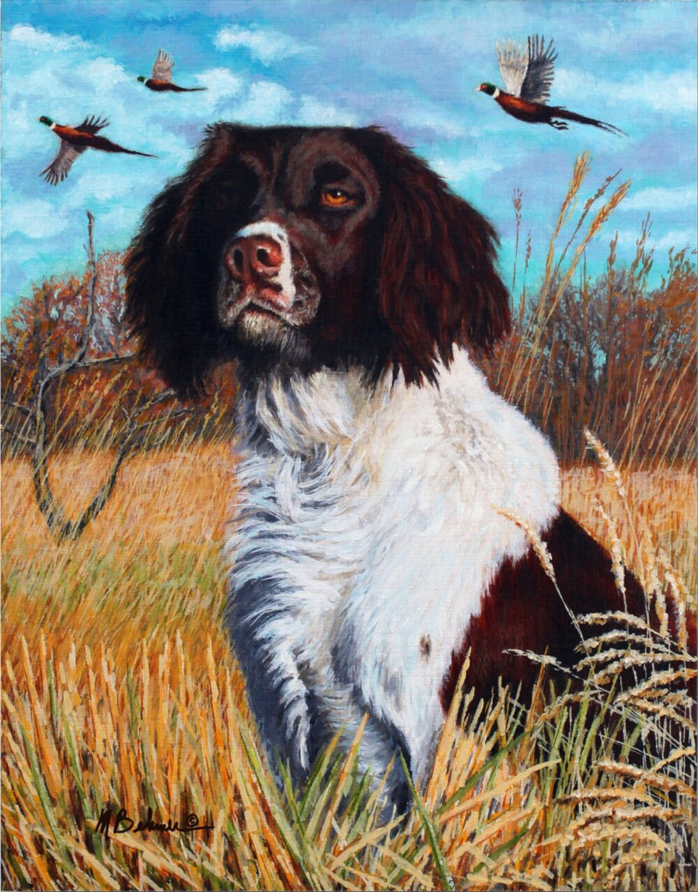 """Ivanhoe's Red Lion in The Field"" - Springer Spaniel"