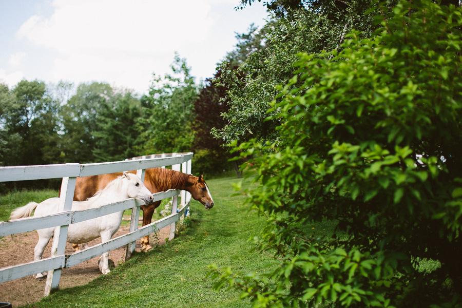 Horse Farm Wedding Photography