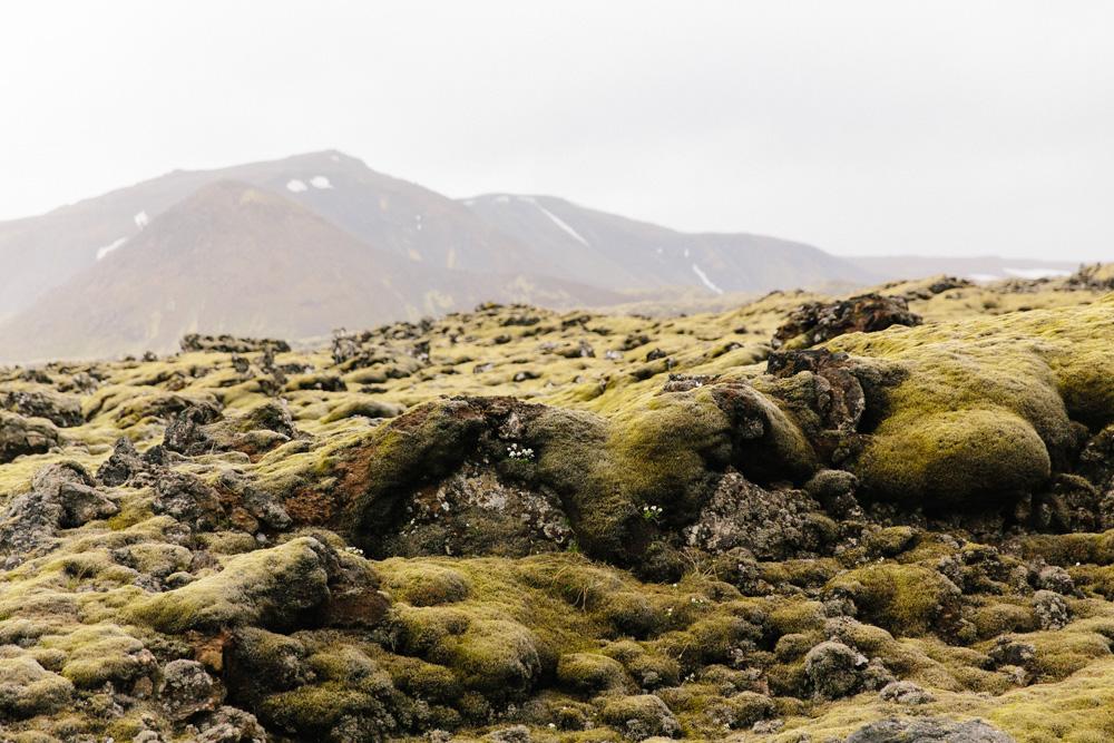 004-icelandic-moss.jpg