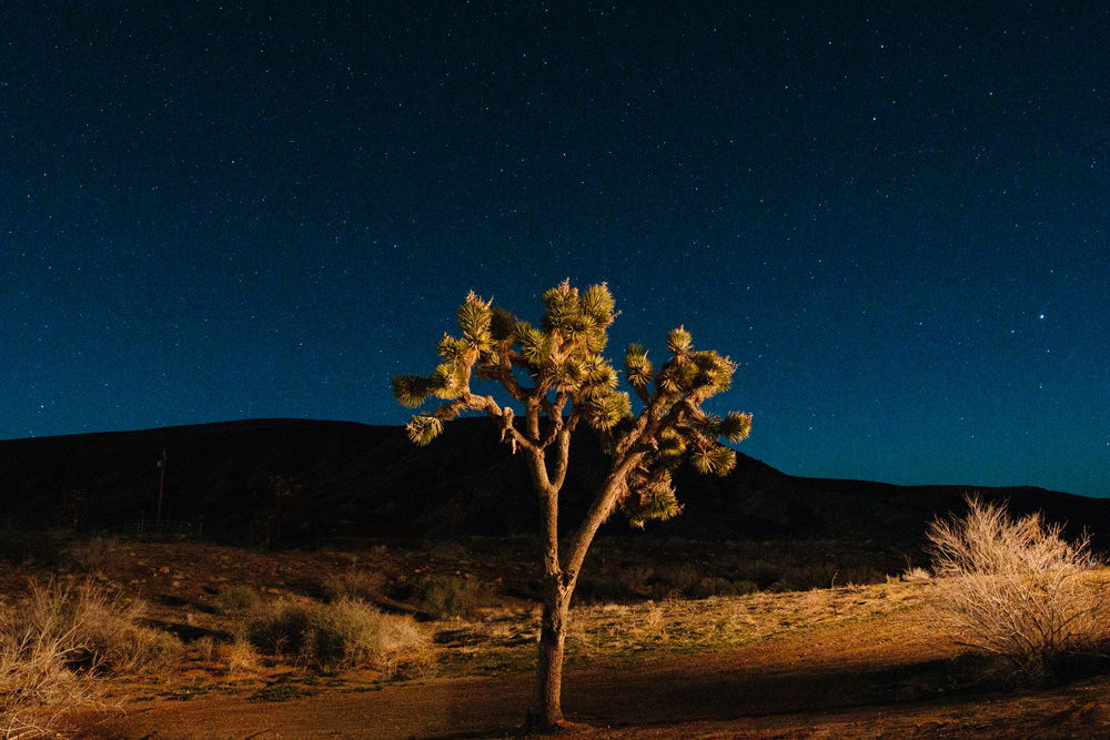 012-joshua-tree-night-shot.jpg