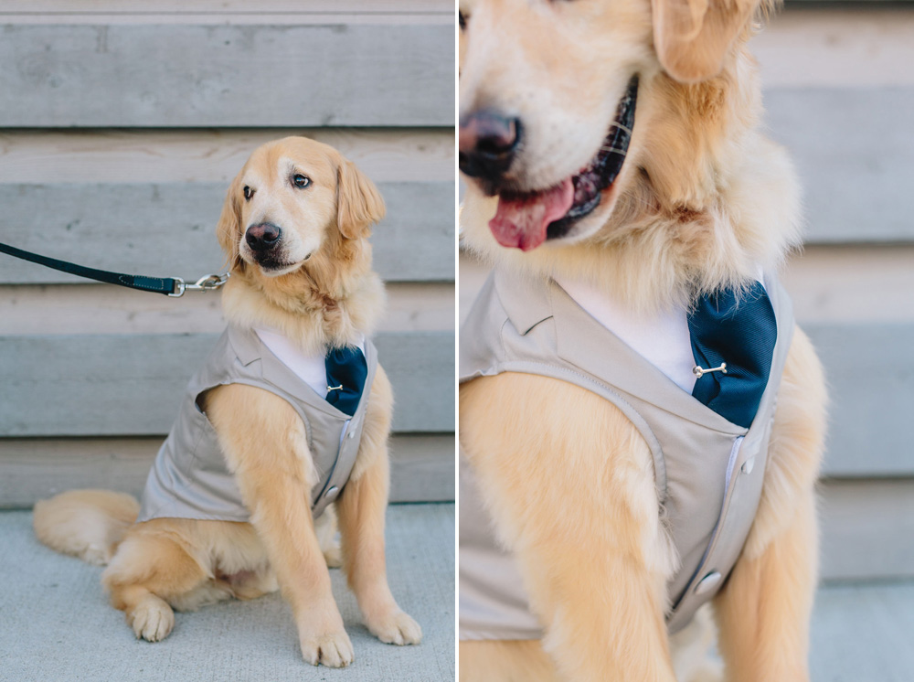 042-dog-wedding.jpg