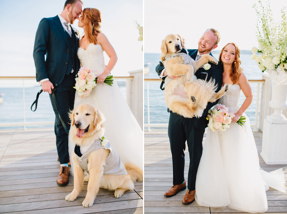070-dog-wedding-photo.jpg