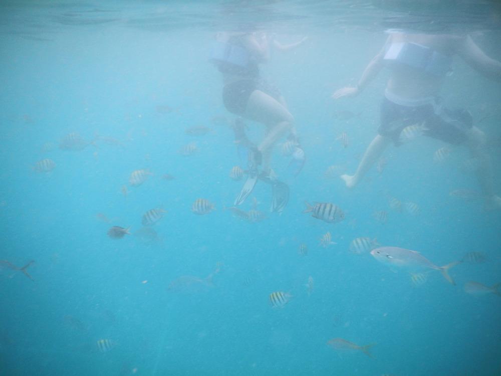 [January, 2015; St. Maarten]