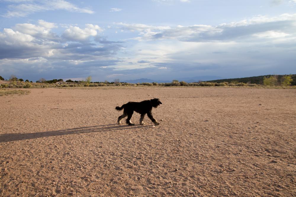 Slowly sifting through my New Mexico photographs…    [September, 2012; Santa Fe, NM]