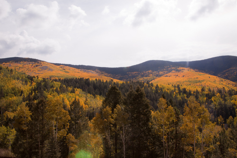 Aspens/Fall [September, 2012;  outside of Santa Fe, NM]